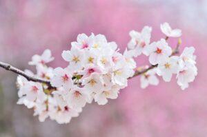 諸国民の春